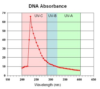 DNA-absorbance-of-UV-radiation-is-greatest-for-UVC-rays